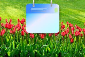Agenda para cuidar el jardín cada mes